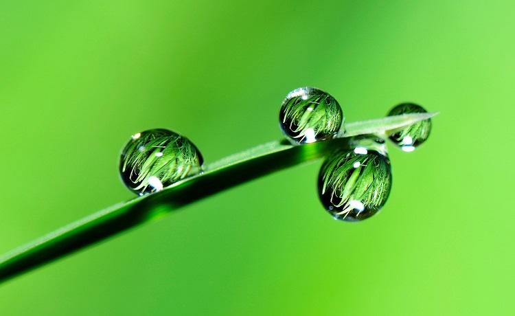 vert - plante - eau - goutte v750x460